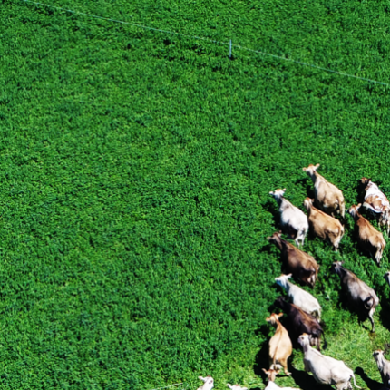Midwest Grazing Exchange
